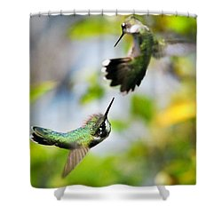Hummingbirds Ensuing Battle Shower Curtain by Christina Rollo