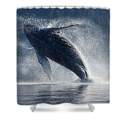 Humpback Whale Breaching In The Waters Shower Curtain by John Hyde