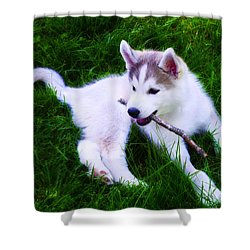Huskie Pup Playing Fetch Shower Curtain by Bill Cannon