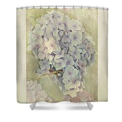 Hydrangea Macrophylla Blue Bonnet Shower Curtain by John Edwards