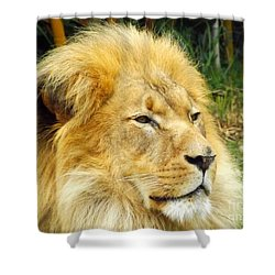 I Am King Shower Curtain by Clare Bevan