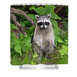 I Am Standing Up Straight Shower Curtain by Kym Backland