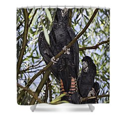 I Say Old Chap Shower Curtain by Douglas Barnard