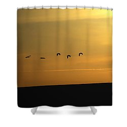 Ibis Sunrise Shower Curtain by Ernie Echols