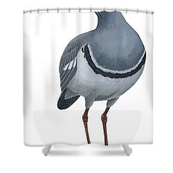Ibisbill Shower Curtain by Anonymous