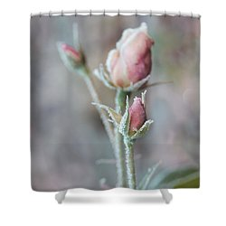 Ice Princess Pink Rose Bud Shower Curtain by Jennie Marie Schell