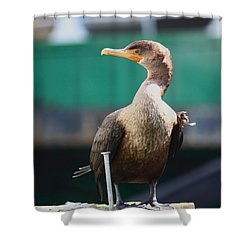 I'm Looking At You Shower Curtain by Kym Backland