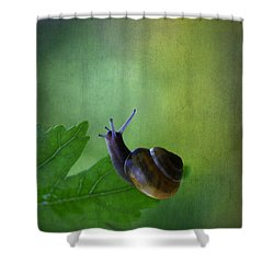 I'm Not So Fast Shower Curtain by Annie  Snel