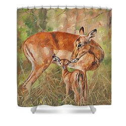 Impala Antelop Shower Curtain by David Stribbling