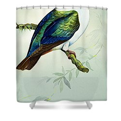 Imperial Fruit Pigeon Shower Curtain by Bert Illoss