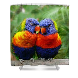 In Love Lorikeets Shower Curtain by Peggy  Franz
