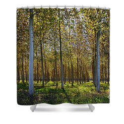 In Rank And File  Shower Curtain by Hannes Cmarits