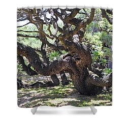 In The Depth Of Enchanting Forest Vi Shower Curtain by Jenny Rainbow