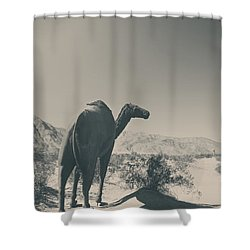 In The Hot Desert Sun Shower Curtain by Laurie Search