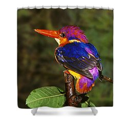 India Three Toed Kingfisher Shower Curtain by Anonymous