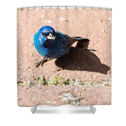 Indigo Bunting Shower Curtain by Jon Woodhams