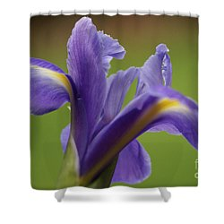 Iris 3 Shower Curtain by Carol Lynch