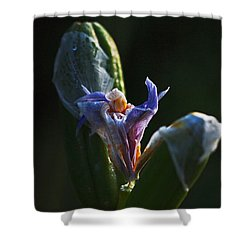 Iris Emerging  Shower Curtain by Rona Black