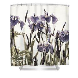 Iris In The Park Shower Curtain by Priska Wettstein