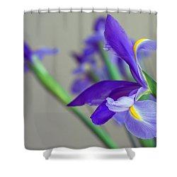 Iris Shower Curtain by Lisa Phillips