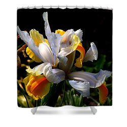Iris Shower Curtain by Rona Black