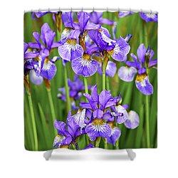 Irises Shower Curtain by Elena Elisseeva