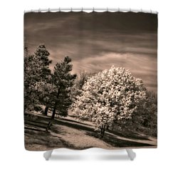 ...is But A Dream Shower Curtain by Steve Harrington