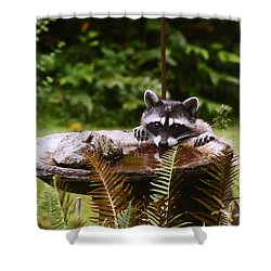 It Is Not Just For The Birds Shower Curtain by Kym Backland
