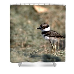 Its A Killdeer Babe Shower Curtain by Skip Willits