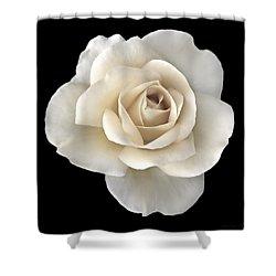 Ivory Rose Flower Portrait Shower Curtain by Jennie Marie Schell