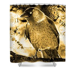 Jackdaw Shower Curtain by Toppart Sweden