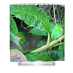 Jamaican Toadies Shower Curtain by Carey Chen