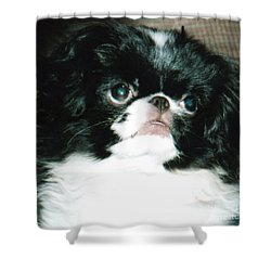 Japanese Chin Puppy Portrait Shower Curtain by Jim Fitzpatrick