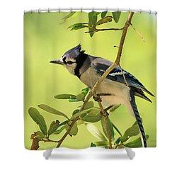 Jay In Nature Shower Curtain by Deborah Benoit