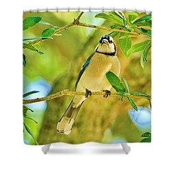 Jay In The Tree Shower Curtain by Deborah Benoit