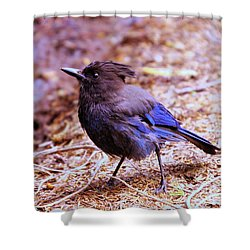 Jay  Shower Curtain by Jeff Swan