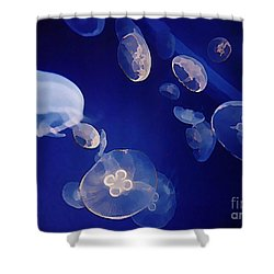 Jelly Fish Shower Curtain by John Malone