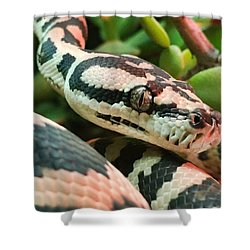 Jungle Python Shower Curtain by Kelly Jade King