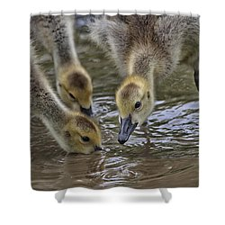 Just Babes Shower Curtain by Karol Livote