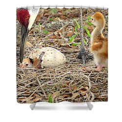 Just Hatching Shower Curtain by Zina Stromberg