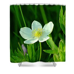 Just One Pretty Flower Shower Curtain by Jeff Swan