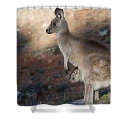 Kangaroo And Joey Shower Curtain by Steven Ralser