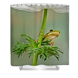 Kermits Canopy Shower Curtain by Susan Candelario