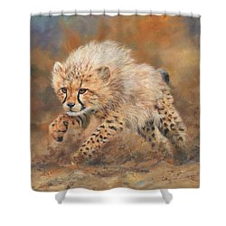 Kicking Up Dust 3 Shower Curtain by David Stribbling