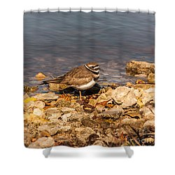 Kildeer On The Rocks Shower Curtain by Robert Frederick
