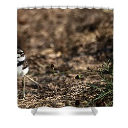 Killdeer Chick Shower Curtain by Skip Willits