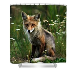 Kit Red Fox Shower Curtain by Robert Bales