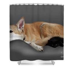 Kitten And Canine Shower Curtain by Linsey Williams