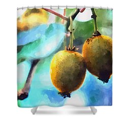 Kiwi Fruit Ripening On A Tree Shower Curtain by Lanjee Chee