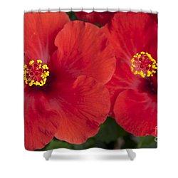Kokio Ulaula - Tropical Red Hibiscus Shower Curtain by Sharon Mau